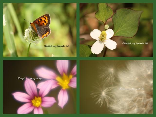 2009-05-27-1637-419.jpg