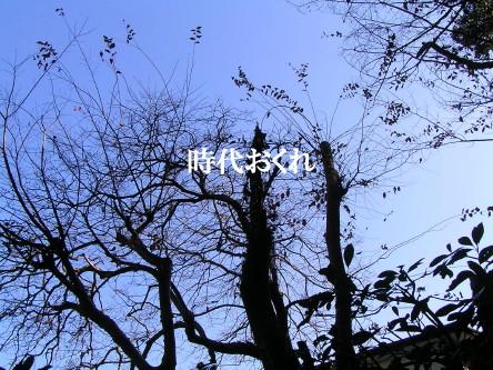 時代おくれ_1.jpg