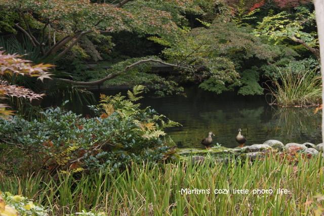 garden5_1.jpg