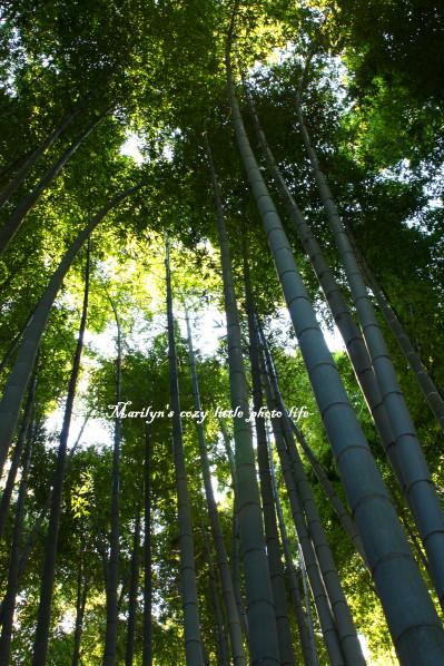 hokokuji take_1.jpg