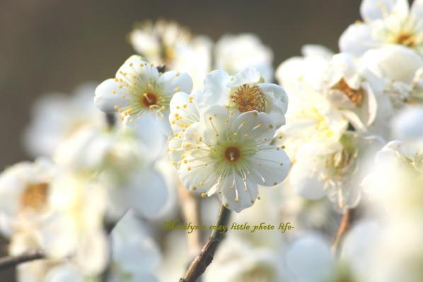 hokokuji8_1.jpg