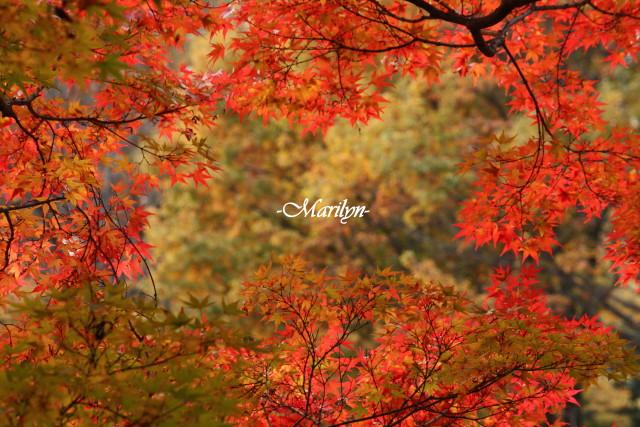 momiji10_1.jpg