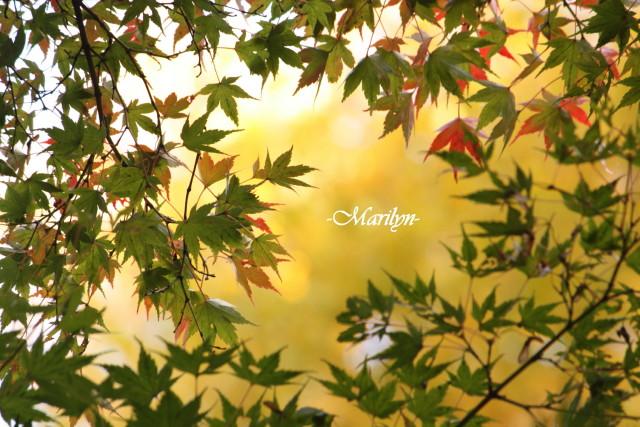 momiji8_1.jpg