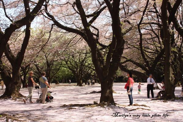 sakura no jyutan2_1.jpg