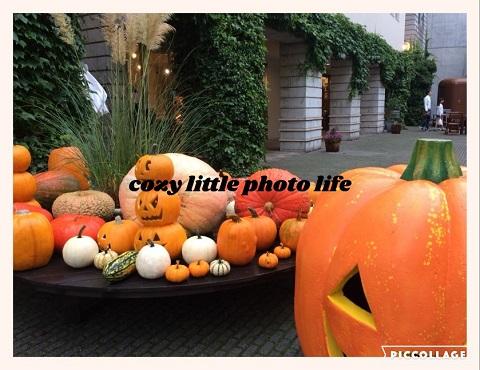Collage 2018-09-17 10_43_04.jpg