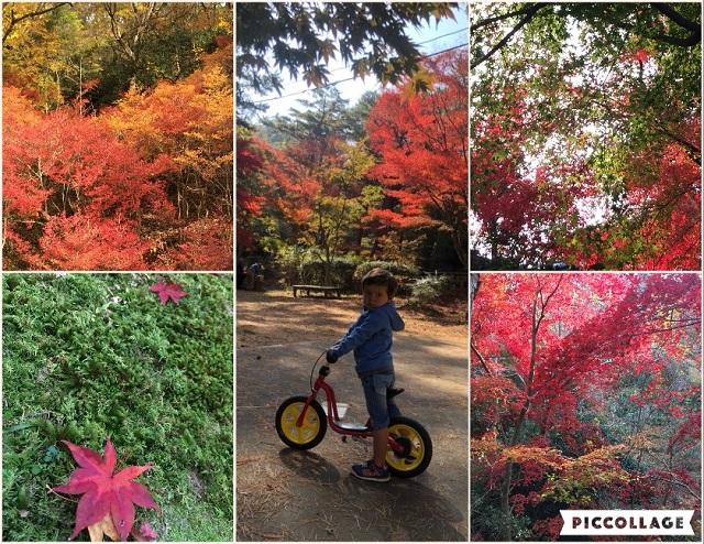 Collage 2018-12-05 13_32_25.jpg