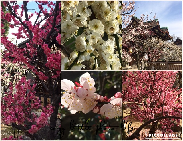 Collage 2019-03-05 22_41_39.jpg