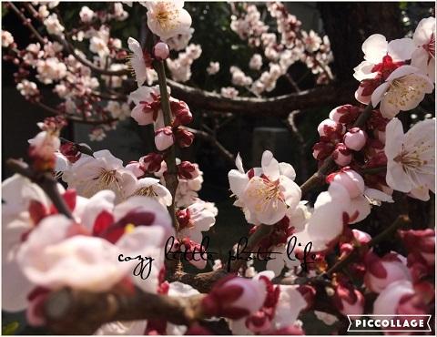 Collage 2019-03-05 22_43_55.jpg