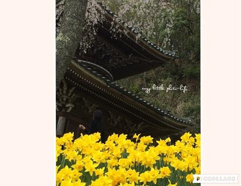 Collage 2019-04-08 17_18_25.jpg